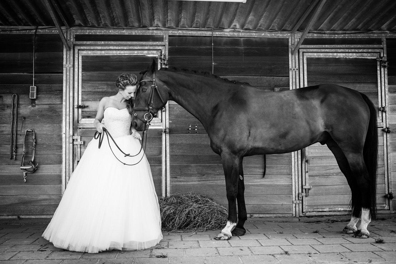11-paard-bruiloft-trouwfotograaf