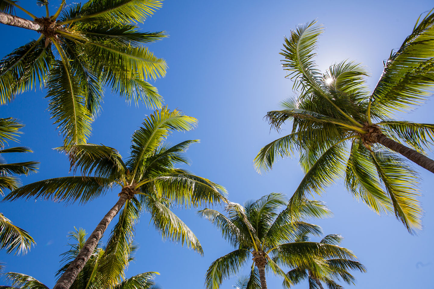 38-Coconut-Palm-Inn-Wedding-Photography