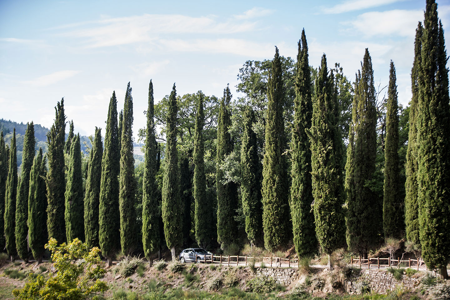Tuscany wedding cypress trees